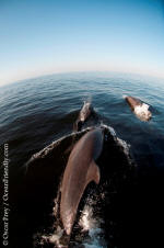 puerto vallarta tourism activites - dolphins during whale watching tour