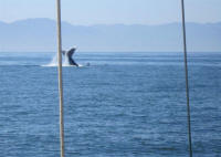 whale watching puerto vallarta mexico - Boana day trips on the bay